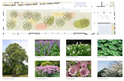 essenze-giardino
